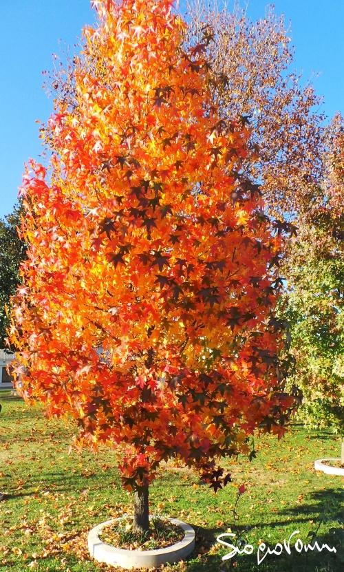 ultime foglie.jpg